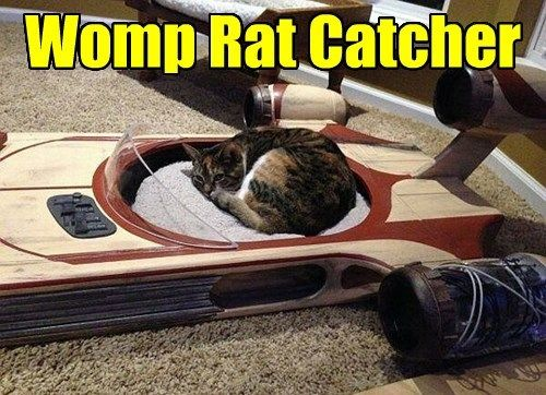 Currently In A Womp Rat Coma Star Wars Geek Cool Cats Funny Animals Feel good and look good with the brand new womp life packages. pinterest