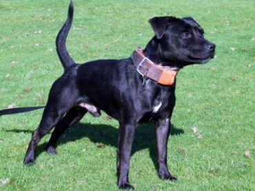 Best Dog Breeds Pictures Information And Reviews Patterdale Terrier Dog Breeds Pictures Best Dog Breeds