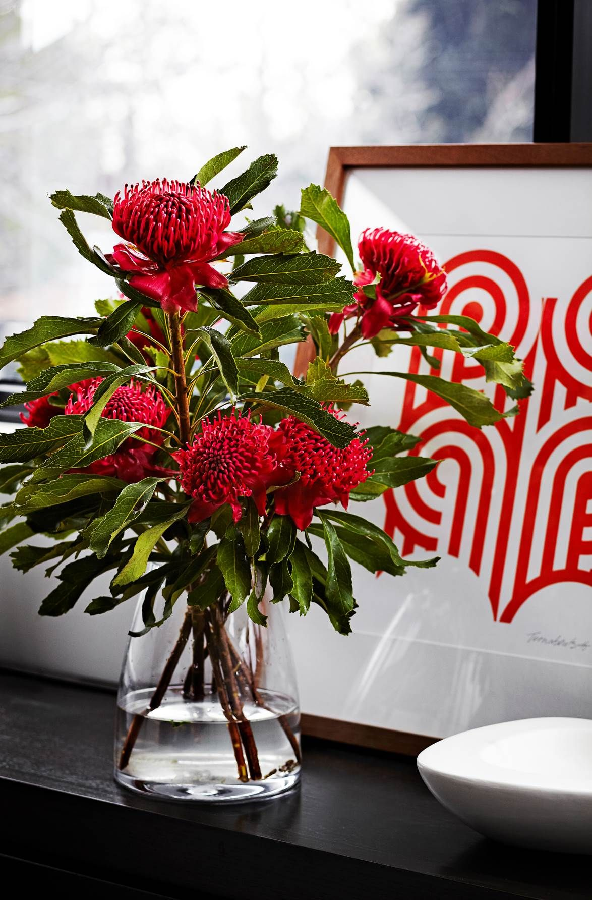 A Vase Of Red Waratahs Provides A Welcome Pop Of