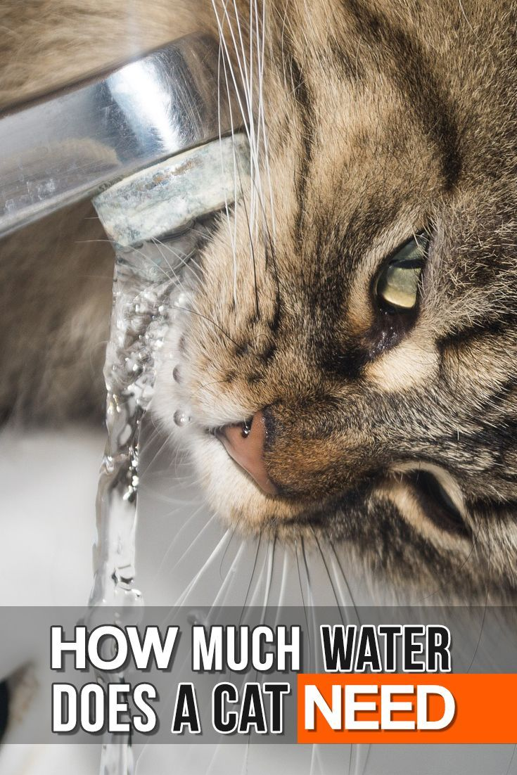 You may think cats don't need much water, but they need to