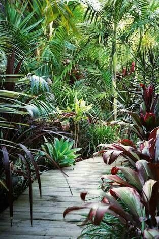 Pin by Jorge Coto Quijano on jardines | Pinterest | Tropical garden ...