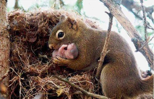 Squirrels are actually very kind to each other and will adopt abandoned baby squirrels: