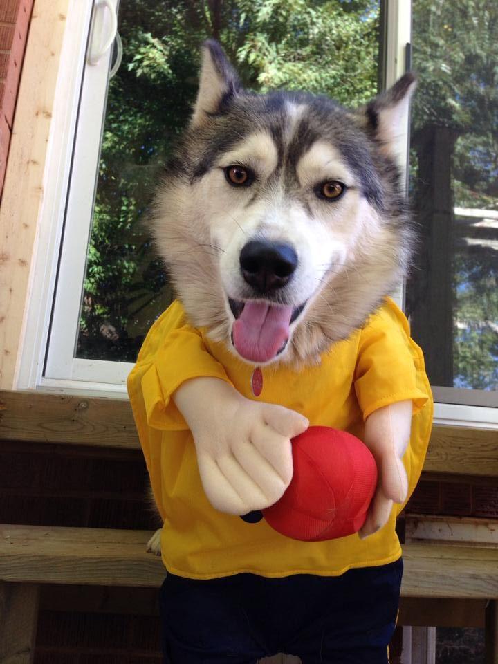 Basketball player dog costume dog costumes dog