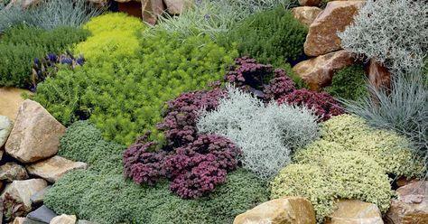 Bodendecker mit Blatt- und Blütenschmuck