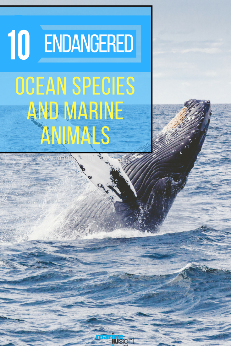 10 Endangered Ocean Species and Marine Animals Marine