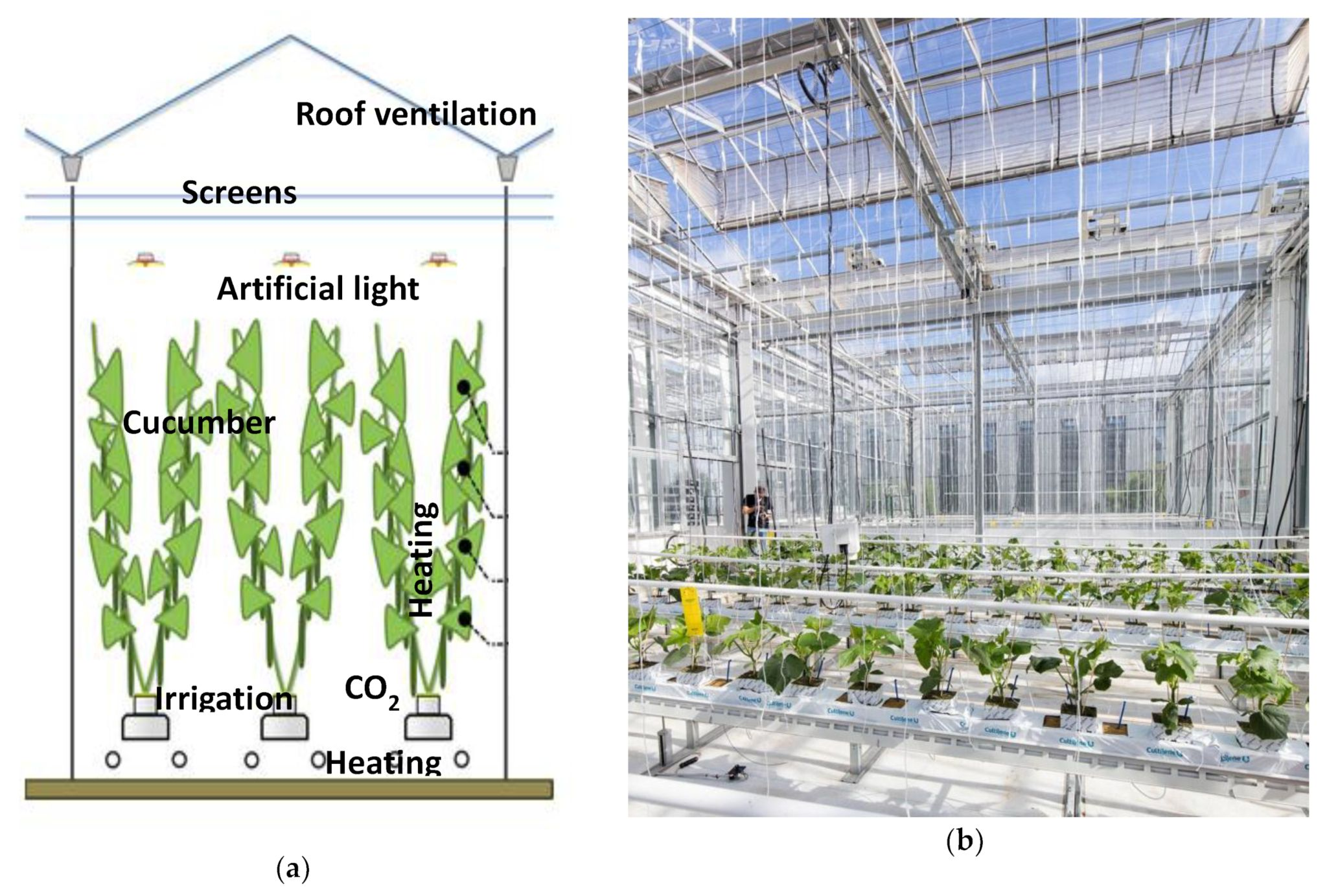 Remote Control Of Greenhouse Vegetable Production With Artificial Intelligence Greenhouse Climate Irrigation And Crop Production Greenhouse Vegetables Greenhouse Greenhouse Growing