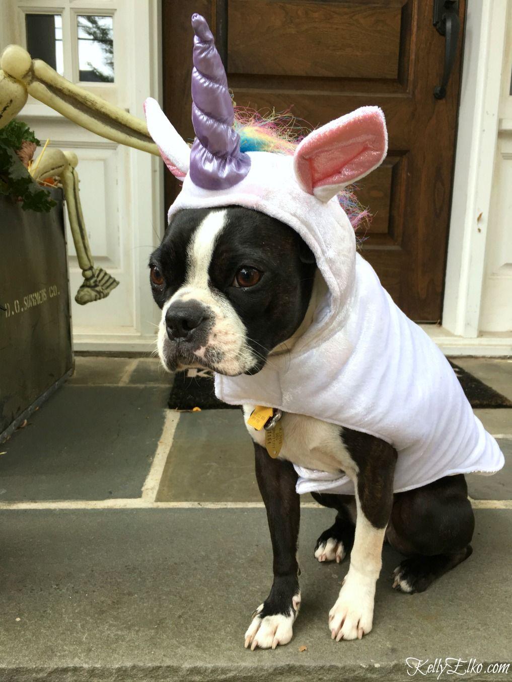My Halloween Porch Diy Dog Costumes Unicorn Costume Halloween