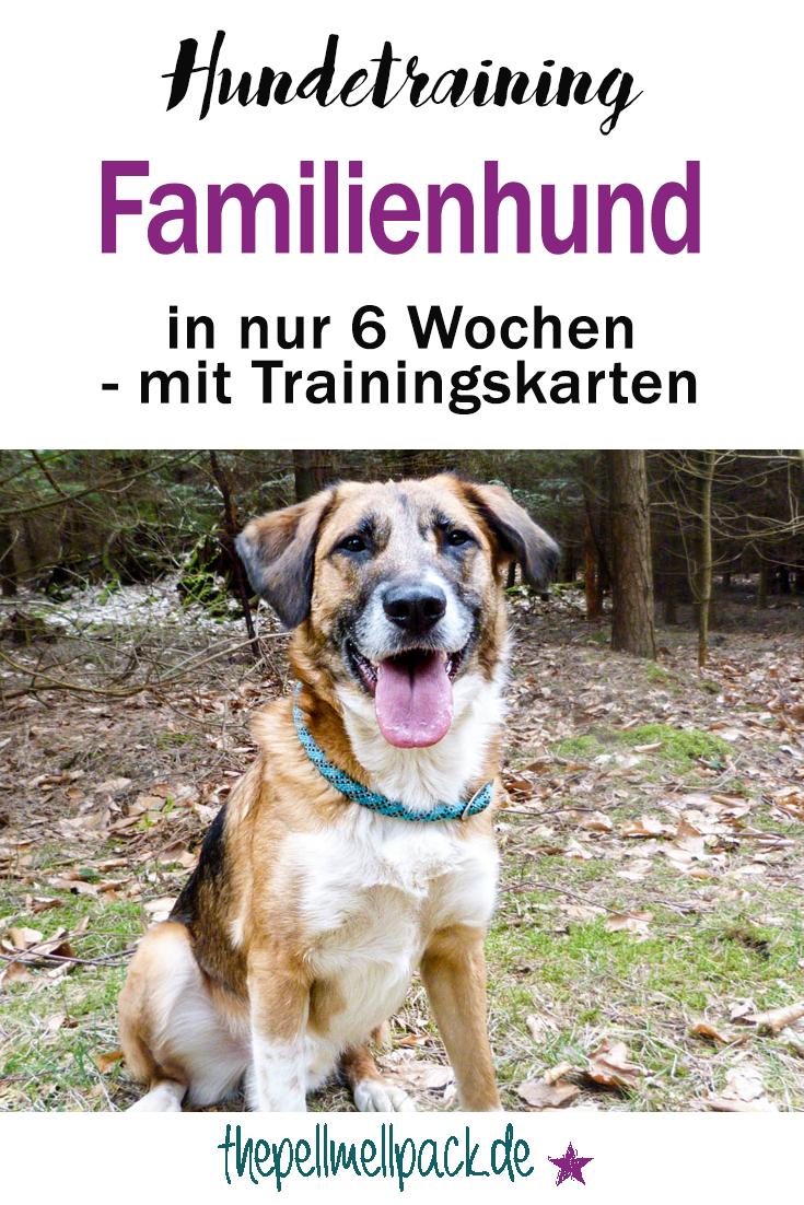 In 6 Wochen Zum Familienhund Teil 3 Familienhund Hundchen Training Und Hunde
