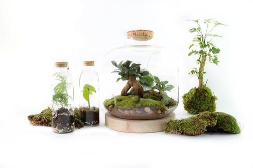 le concept green factory mini serre terrarium jardin en pot pinterest green factory art. Black Bedroom Furniture Sets. Home Design Ideas