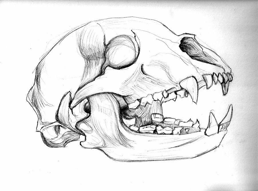 Image result for bear skull drawing | Inspirations | Bear