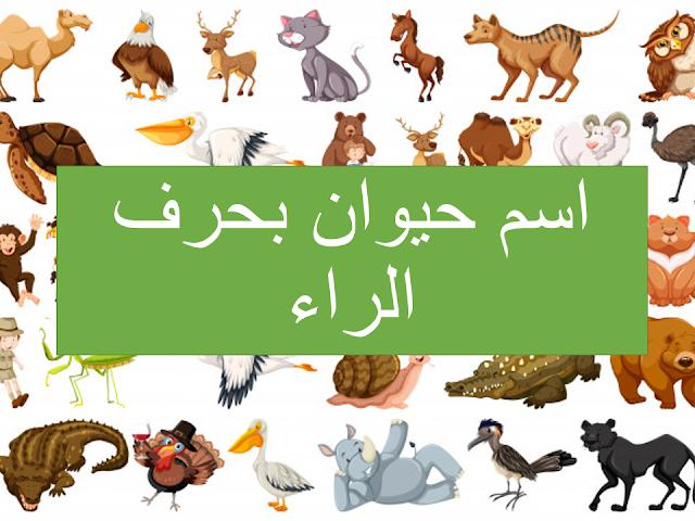 اسم حيوان بحرف الراء مع معلومات مفيدة Lettering Animals Poster
