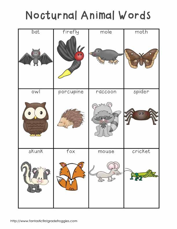 Nocturnal Animal Words | Nocturnal animals and Writing centers
