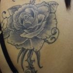 Rose, fully healed