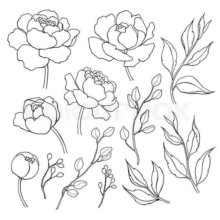 Peony Flower And Leaves Line Drawing Vector Hand Drawn Outline Floral Set Simple Botanical Peonies Branch Flower Line Drawings Flower Drawing Peony Drawing