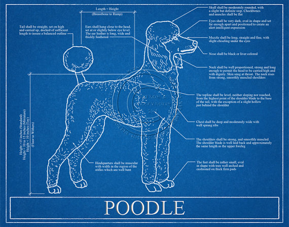 Poodle Blueprint Elevation / Poodle Art / Poodle Wall Art / Poodle ...