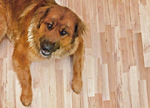 Homeplaza - Mit hochwertigen Produkten erstrahlt der Untergrund dauerhaft schön - Geölte Holzfußböden schützen? Ja, natürlich!