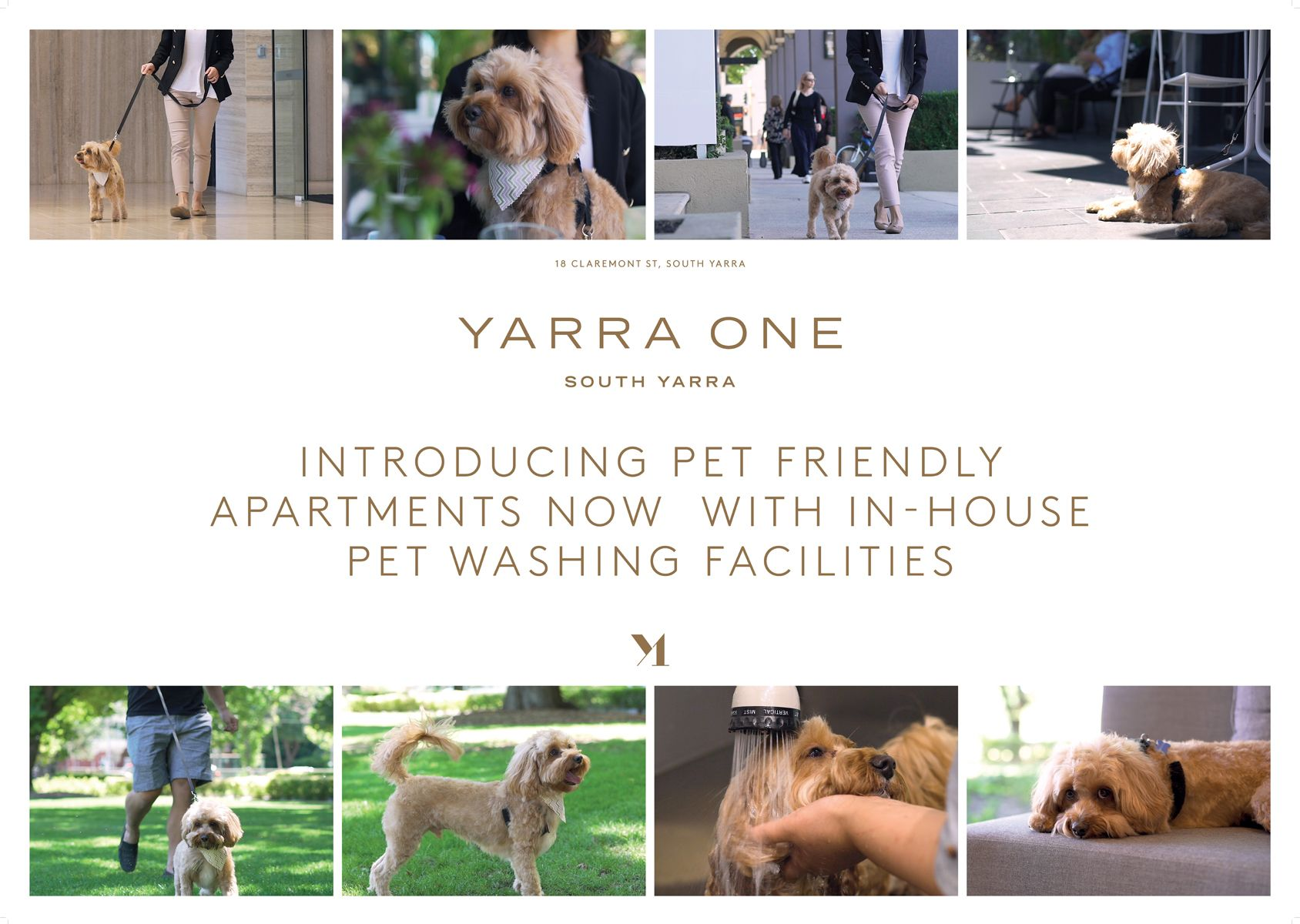 Yarra One Introducing Pet Friendly Apartments Now With In House