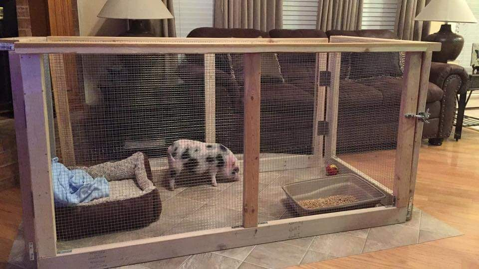 Mini pig indoor housing this would definitely be good for for Indoor pig pen ideas