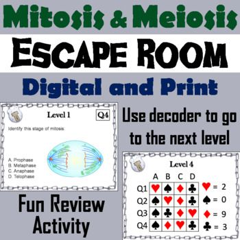 Mitosis and meiosis activity escape room science knowledge mitosis and meiosis activity escape room science fandeluxe Images