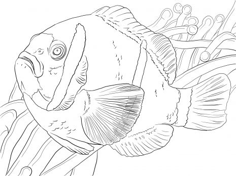 Sea Anemone Coloring Pages Barrier Reef Anemonefish Coloring