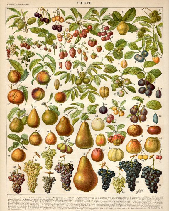 Understanding Different Fruit Types