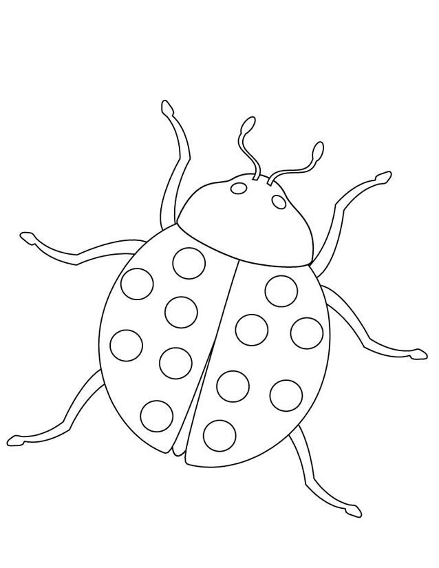 Coloriage coccinelle | insectes | Pinterest | Coloriage, Coloriage coccinelle et Coloriage insectes