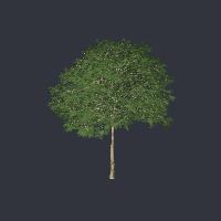 tree fbx free 3D model 057.FBX vertices - 176682 polygons - 162912 See it in 3D: https://www.yobi3d.com/v/Lgs1vKvcHs/057.FBX