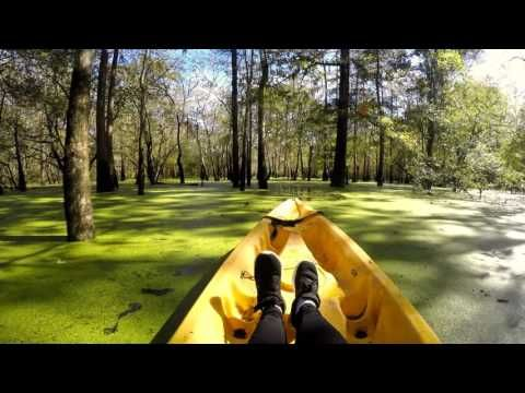 Which Swamp Tours of New Orleans are Best? | Free Tours by