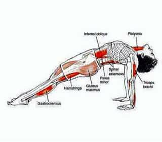 estiramiento  workouts  yoga yoga anatomy plank pose