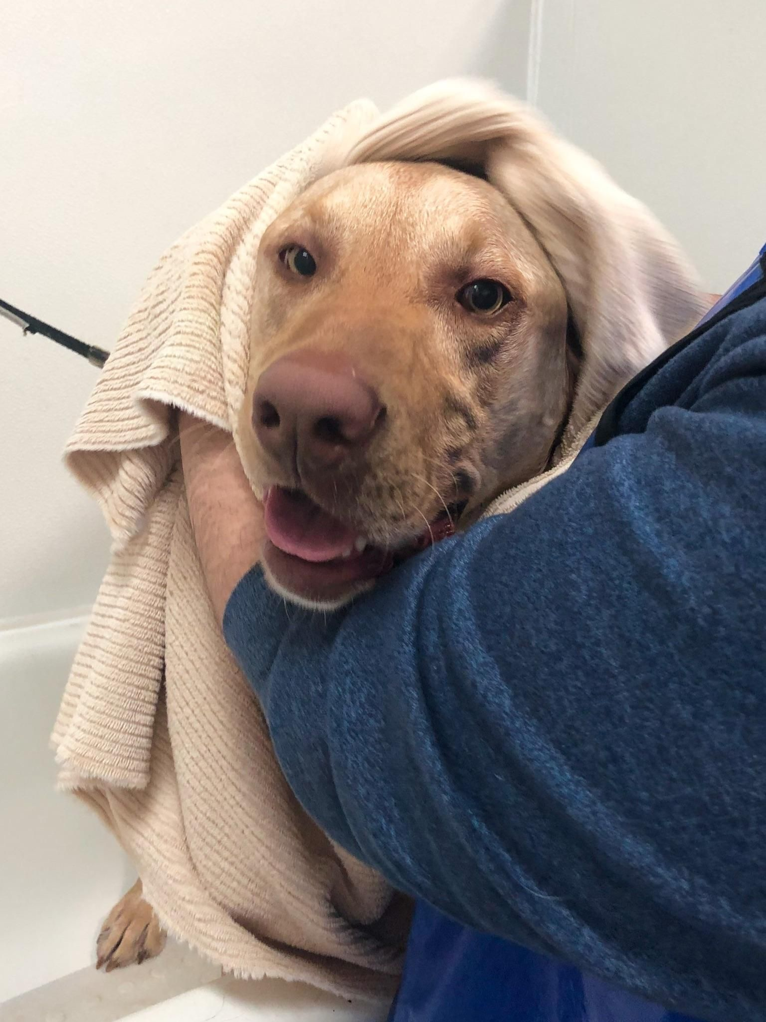 Gus Loves Bath Time Dogpictures Dogs Aww Cuteanimals