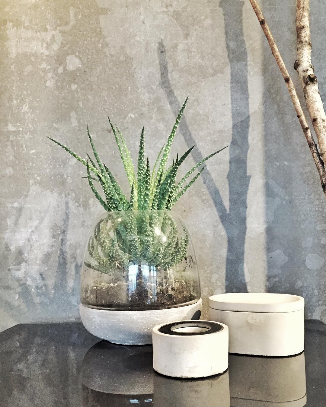 boconcept spring concrete design accessories plant flower glass interiordesign. Black Bedroom Furniture Sets. Home Design Ideas
