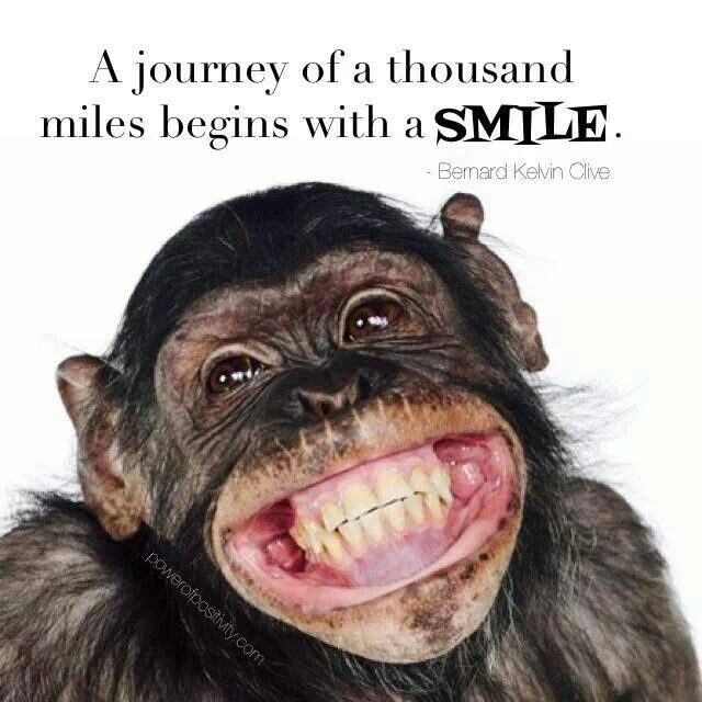 Alway Smile Like A Monkey With A Banana Quotes Pinterest