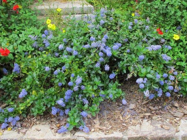Arte y jardiner a dise o de jardines plantas perennes - Arbustos perennes para jardin ...