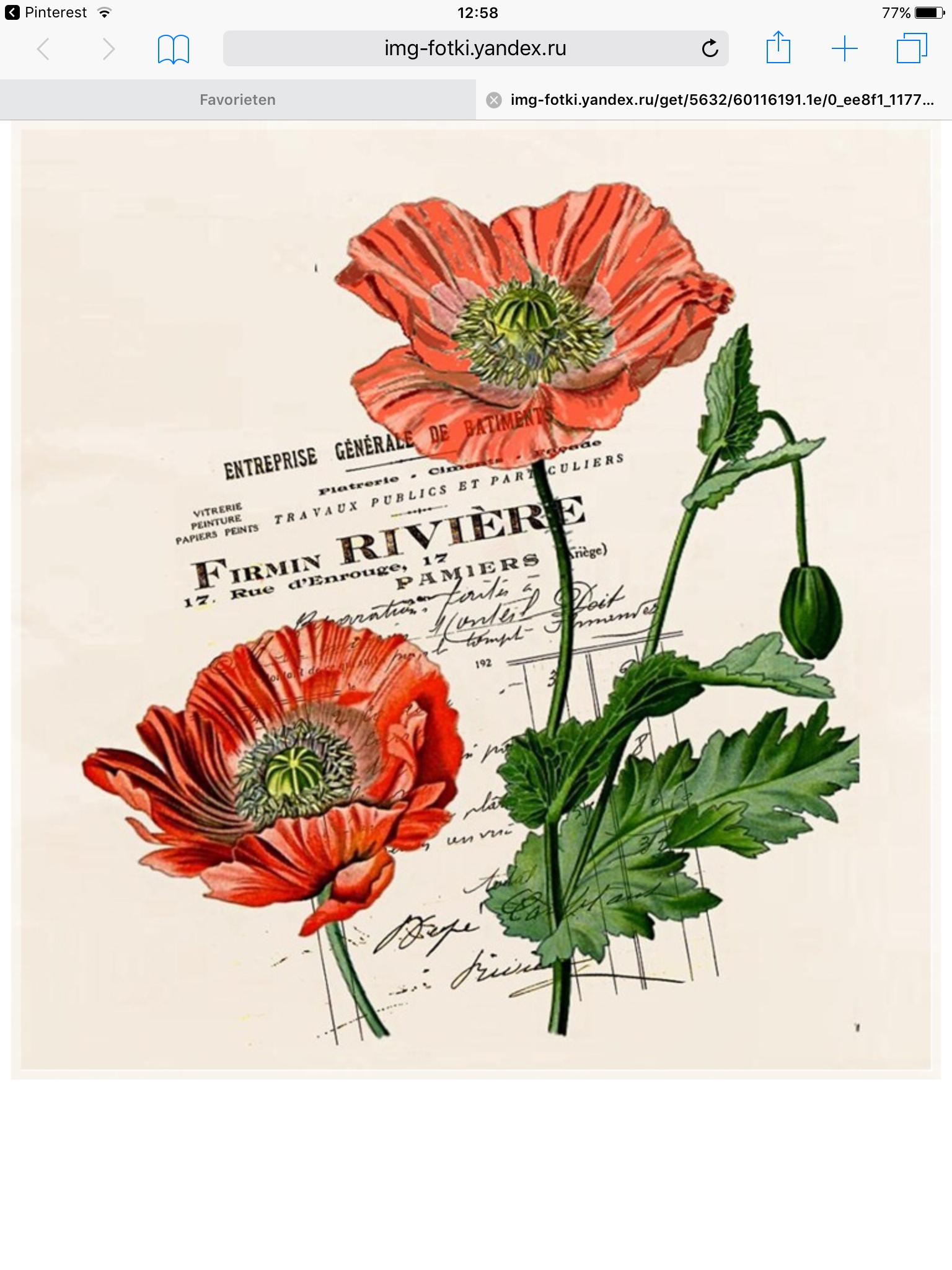 Entreprise Generale De Batiment 77 vintageroses・postcard・antiqueflower・シガレットカードetc