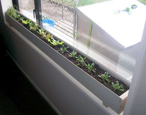 Build An Indoor Window Box How Great For Herbs In The Kitchen