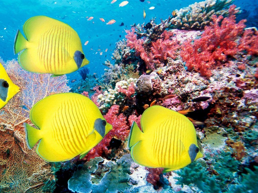 Monde sous marin de poissons tropicaux et coraux fonds d for Fond ecran monde