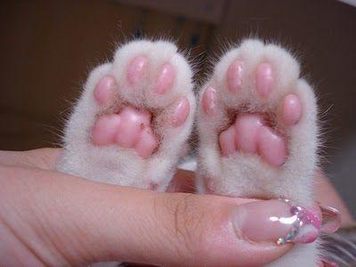 Eeeeeee! Pretty pink kitty feet.