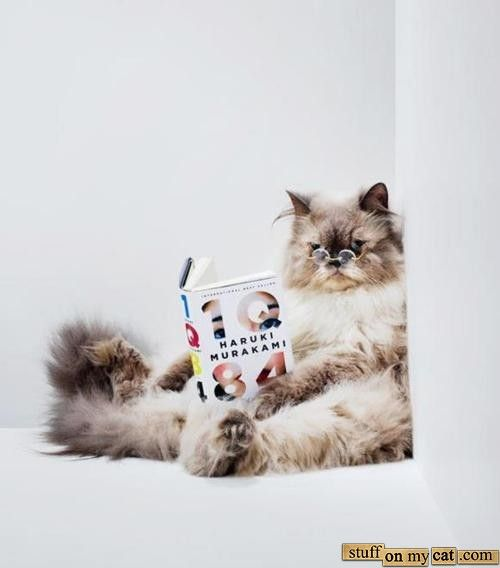 Image result for cats reading
