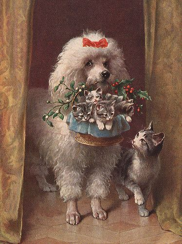 Vintage Poodle Holding Lovely Basket Of Christmas Kittens