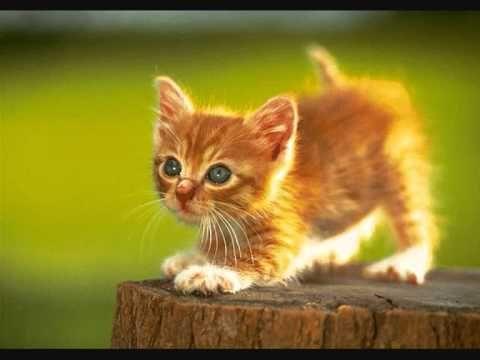 Le renard et le petit chat jacky galou chanson pour enfants youtube renards pinterest - Image de petit chat ...