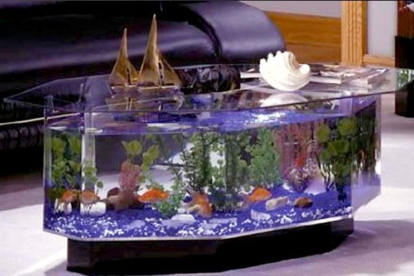 17 best images about fish tank ideas on pinterest live fish over it and pet lovers