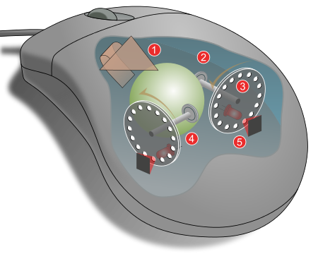 Wikipedia The Free Encyclopedia Computer Mouse Computer Mouse