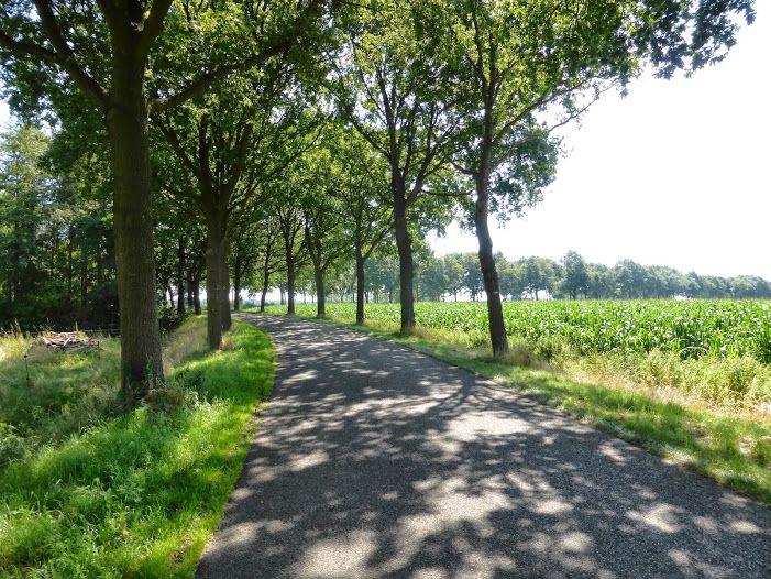 Bellingwolde (Groningen)