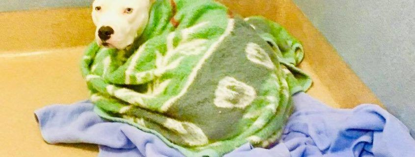 Special Needs Shelter Pup Needs His Blankies Close By With