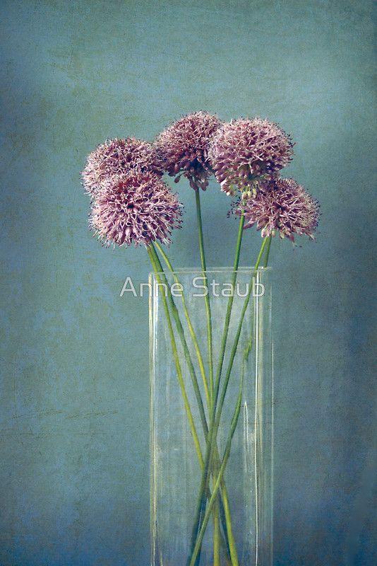 Dried flowers-alliums