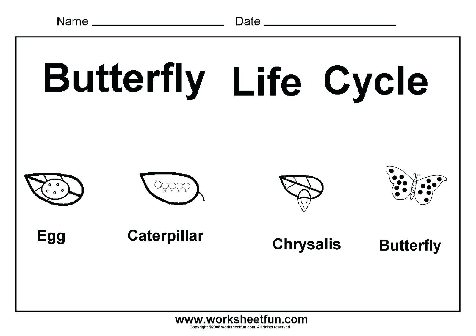 This Is A Good Worksheet To Practice The Butterfly Cycle