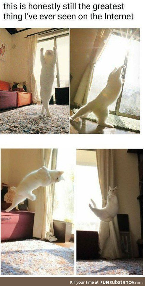 Photo of Solicite accesorios para gatos en Amazon.de.