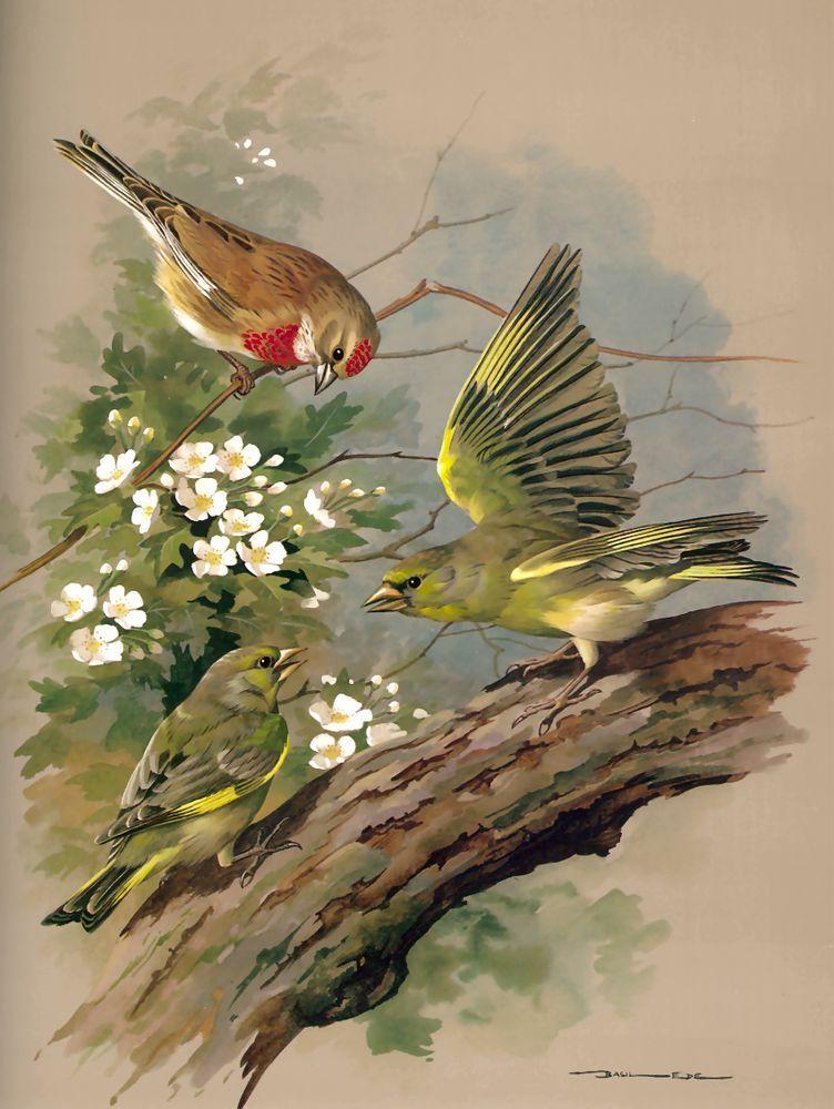 Открытки птичек, людмила