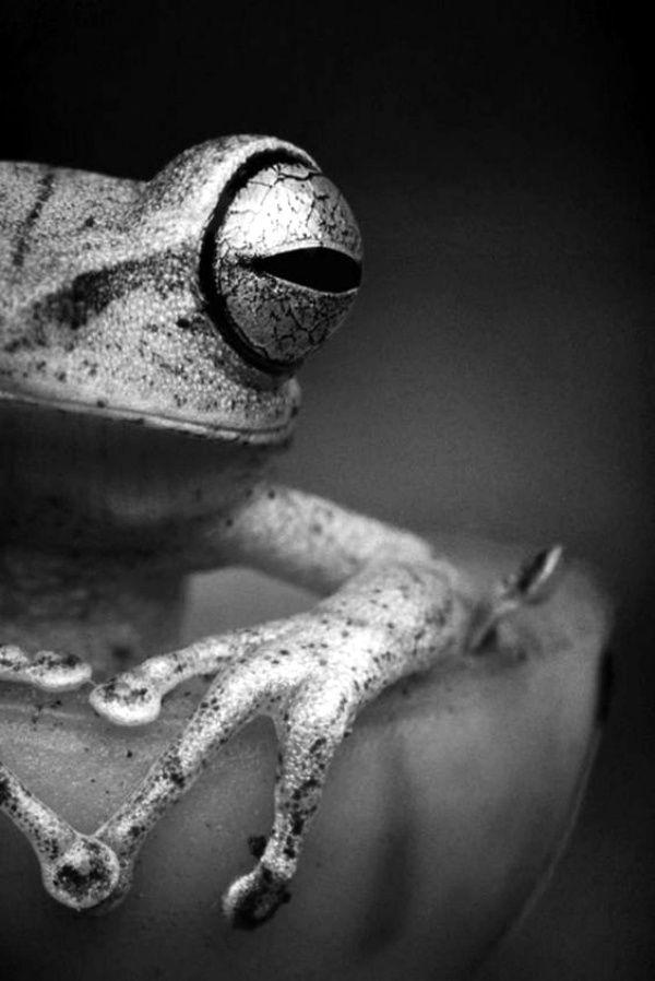 40 erstaunliche Froschbilder, zum sie besser zu verstehen –  40 erstaunliche Froschbilder, zum sie besser zu verstehen  – #besser #erstaunliche #frosc…