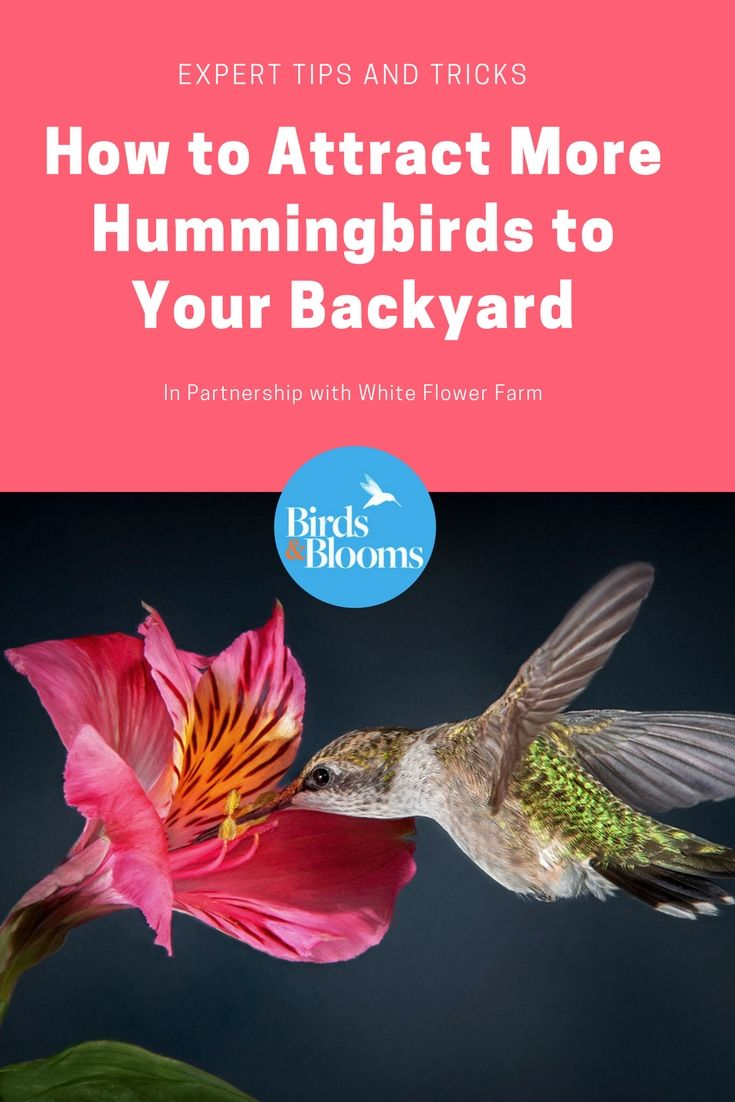 How to Attract More Hummingbirds to Your Backyard ...
